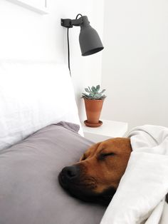 IKEA Hektar wall lamp
