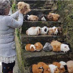Guinea Pig Lover 68 (@guinea_pig_lover_68) • Instagram photos and videos
