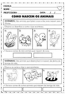aprendendocomtiadebora: ANIMAIS ( COMO NASCEM / VERTEBRADOS E INVERTEBRADOS) - 1°ano