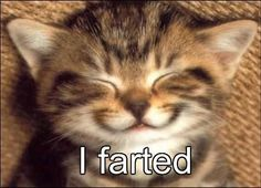 Kitteh Farted