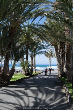 Palm trees in Playa de Las Americas with beach in background. Tenerife Beaches