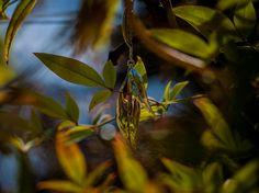 Leaf Earrings by Tamar & Bryan , via Behance