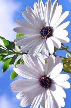 Margarita #Flowers