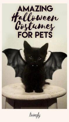 These Animals Are Celebrating Halloween Better Than You Cute Cats, Funny Cats, Funny Animals, Cute Animals, Amazing Halloween Costumes, Halloween Fun, Halloween Decorations, Burmilla Cat, Chartreux Cat