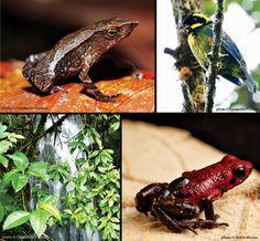 Protect Las Tángaras Cloud Forest-the Rainforest Site/Greater Good.com