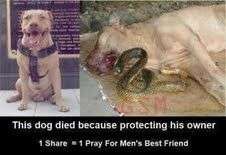 This poor animal gave his life to protect his owner!