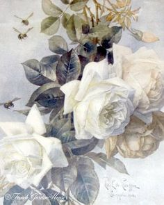 Paul De Longpre  white roses