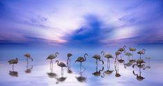 'Flamingos' by mbies55 on 500px