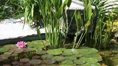 kertépítés, kerttervezés, különleges kertek, letisztult, modern Modern Garden Design, Landscape Design, Garden Inspiration, Backyard Landscaping, Water, Plants, Houses, Gardening, Gardens