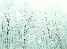 Winter White Vermont