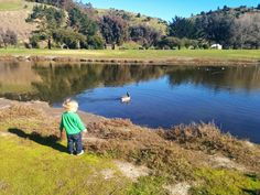 Chasing Geese in Point Richmond - Richmond, CA photo copyright by Lindy Davis 2015 Pinole, Point Richmond, San Pablo, California Dreamin', Bay Area, Spring, Fun, Baby, Inspiration