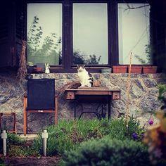 My sweet Payo (one of my ferals) #cat #cats #catstagram #pet #pets #animal #animals #petstagram #catsofinstagram #ilovemycat #instagramcats #catoftheday #lovecats #furry #meow #adorable #catlover #instacats #instacat #crazycatlady #gato #chat