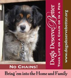 Dogs deserve better! unchain the dogs!