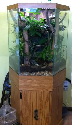 Planted hexagonal vivarium for crested gecko (lots of pics ...