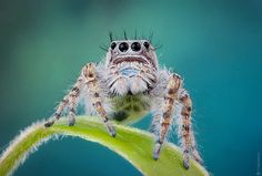 Jumping Spider                                                                                                                                                                                 More