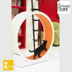 cat wheel katten wiel katloopwiel