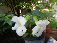 Bunga warna putih
