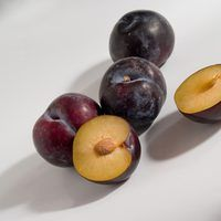 Unlike other fruit trees with small seeds stone fruit trees which make their seeds inside pits grow true to type from seed propagation. These trees include peaches nectarines and apricots and when started this way they produce their first harvest in three