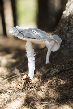 mushroom textiles and wired / textilno drôtená bedľa