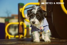 Primavera Verano / Pug / Jack Russell Terrier / Poodle / Caniche / Plaza / Juegos / Park / Happy dog / Fashion Dogs Dog Fashion, Jack Russell Terrier, Happy Dogs, Poodle, Pugs, Animals, King Queen, Spring Summer, Animales
