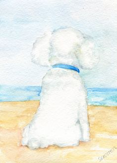 Poodle Watercolors Paintings Original 5 x 7 Dog art, Beach, small original watercolor painting of poodle. white poodle, poodle portrait art by SharonFosterArt on Etsy