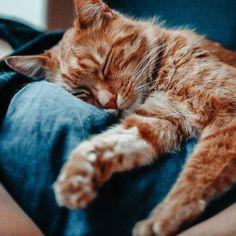 """⠀ Mein Schöni-Bär 😍 Letztens wurde ich gefragt, ob ich auch mit meinen Katzen wie mit einem Keinkind 👶🏼 rede 😂 Ich versteh' die Frage nicht 🤷🏻♀️ wie redet man Sonst mit Katzen?? """"Werter Herr, das Fressen wäre nun angerichtet.....""""? 😂🙈 Nein, nein das ist eher ein """"Uuuuii, wer hat denn da Hunger? Oje, bist du die ärmste Katze der Welt? Na komm her, ich geb dir was, du kleiner Stinke-Bär...."""" 🐻 —————————————————————————⠀ REDEST DU AUCH MIT DEINEN KATZEN???⠀ —————————————————————————⠀… Cats, Animals, Instagram, Gatos, Animales, Animaux, Animal, Cat, Animais"""