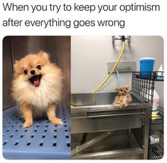 When you try to keep your optimism after everything goes wrong Funny Dog Memes, Funny Animal Memes, Cute Funny Animals, Funny Relatable Memes, Funny Animal Videos, Cute Baby Animals, Funny Cute, Funny Dogs, Funniest Memes