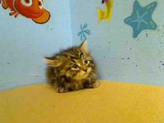 Tiny kitten needs to be rescued today (won't eat and needs to be bottle fed), in NYC shelter. Her name is Hope.