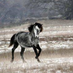 Wild Horse. Danube Delta Romania ~ Delta Dunarii