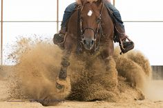 Ranch, Horses, Animals, Guest Ranch, Animales, Animaux, Animal, Animais, Horse