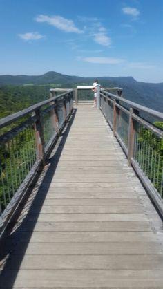 The Skywalk at Dorrigo National Park