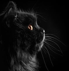 In the Middle Ages black cats were believed to be connected to witchcraft, and Indonesia it's thought that cats control the weather!. Check out these 6 amazing cat supersitions from around the world http://www.styletails.com/2016/05/13/6-amazing-cat-supersitions-from-all-over-the-world/