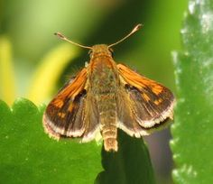 Beth's Blog: Search results for butterflies