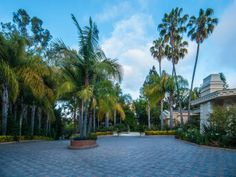 Florida Palm Trees..