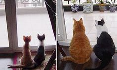15 pics of cats growing up :D