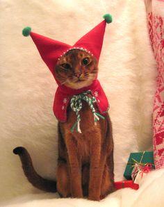 Wool Meowy Christmas Holiday Elf Hood-via Etsy