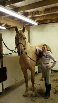 He's one of the youngest but tallest horses at the barn!