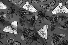Moth Fabric - Grey Moths By Jadegordon - Moth Black White Bug Insect Wing Collection Cotton Fabric By The Yard With Spoonflower Double Gauze Fabric, Cotton Twill Fabric, Fleece Fabric, Insect Wings, Bug Insect, Bugs And Insects, Perfect Wallpaper, Design 24, Custom Wallpaper