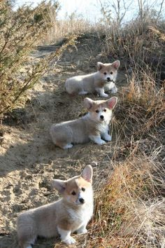 Puppies on the prowl