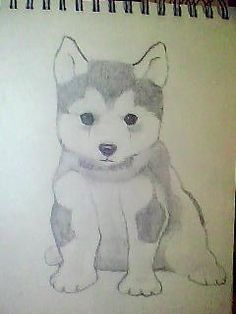 i was saw husky so cute puppy i have one husky Cute Husky Puppies, Puppy Cuddles, Baby Puppies, Pet Puppy, Cute Dogs, Draw So Cute Dog, Husky Drawing, Drawing Tips, Baby Huskys