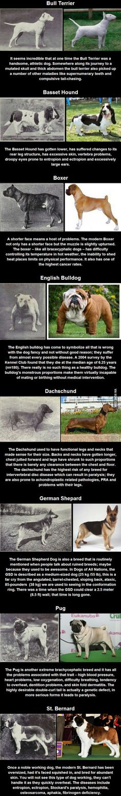 How different dog breeds have changed over the last 100 years. :\