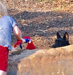 Playing one of my favorite games, hide and seek. Splendour In The Grass, Scottie, My Favorite Things, Games, World, Scottie Dog, Gaming, The World, Scottish Terrier