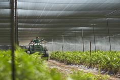 """Lars Hagstrom... applying a treatment to the FERN with the """"Wind Machine""""... AKA Blower... Because Fern Grows so dense... the Blower allows the applications to coat the entire plant and control pests and disease..."""