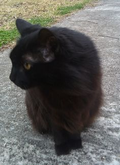 The Guiness Blog by Guiness the Cat: Debbi and I are Writing for Persona Paper Now!