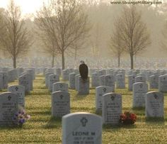 SPECIAL MILITARY CEMETERY PICTURE - EAGLE STANDS VIGIL ! - WOW!