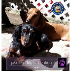 All of the 'Neglect Six' continue to improve thanks to your generous support! Here is Jasmine who has been renamed Lily. She is sunning with her foster brother Buddy and is doing so much better. Have you joined the club supporting this little gang of survivors? Well there is still time. Just follow the link below and don't forget to like and share today's update with friends!  https://www.youcaring.com/NeglectedSix