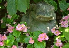 Begonias are a good alternative to impatiens in a shady garden.