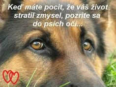 Carpe Diem, Food For Thought, Messages, Thoughts, Education, Dogs, Pet Dogs, Doggies