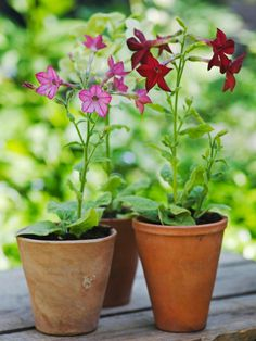 The Best Plants for Summer Fragrance --> http://www.hgtvgardens.com/container-gardening/planting-flowers-for-summer-perfume?soc=pinterest
