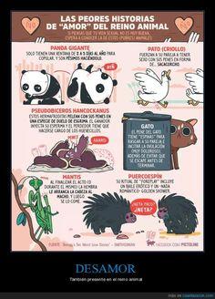 Les pésima vida sexual de algunas especies del reino animal - También presente en el reino animal   Gracias a http://www.cuantarazon.com/   Si quieres leer la noticia completa visita: http://www.skylight-imagen.com/les-pesima-vida-sexual-de-algunas-especies-del-reino-animal-tambien-presente-en-el-reino-animal/